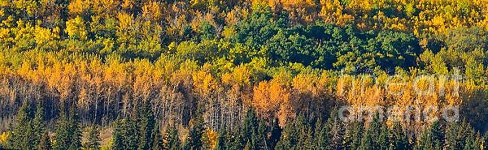 Transition into Fall by Stephanie  Bland