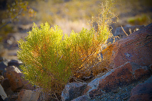 Translucent Foliage by Mike Hill