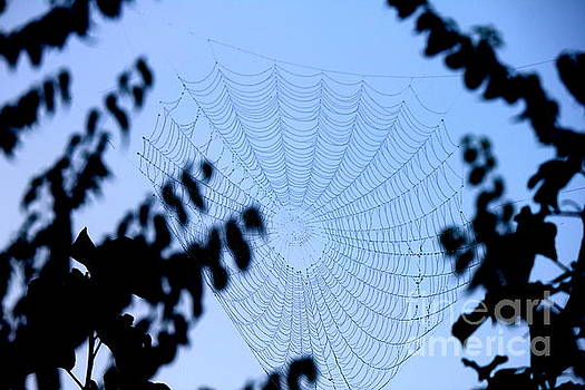 Transparent Web by Sheri LaBarr