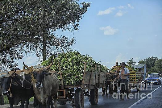 Patricia Hofmeester - Transporting bananas in Cuba
