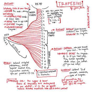 Trapezius by Julie Read