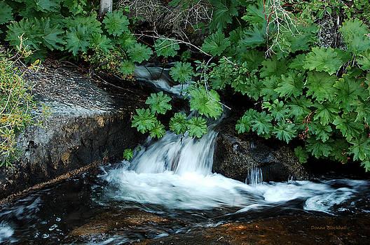 Donna Blackhall - Traveling Downstream