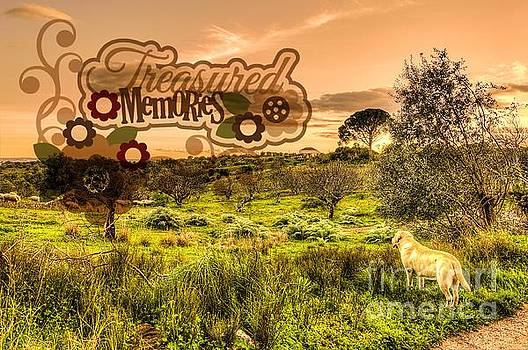 Kathy Tarochione - Treasured Memories
