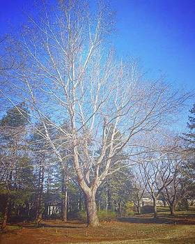 #tree #樹 #sky #空 #nature #自然 by Bow Sanpo
