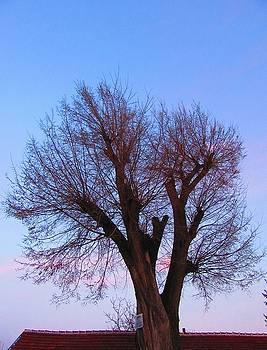 Tree above a roof by Galina Todorova