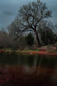 Rick Strobaugh - Tree Against Storm Clouds