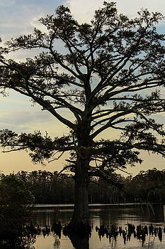 Tree Against the Sky by Carolyn Ricks
