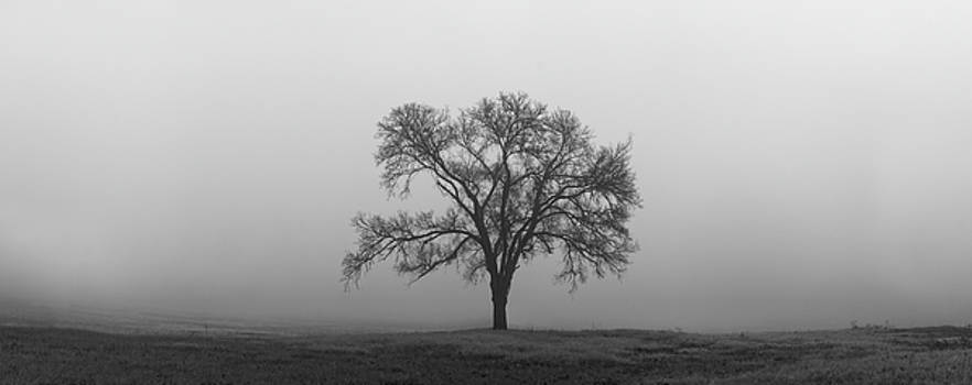 Tree Alone In The Fog by Todd Aaron