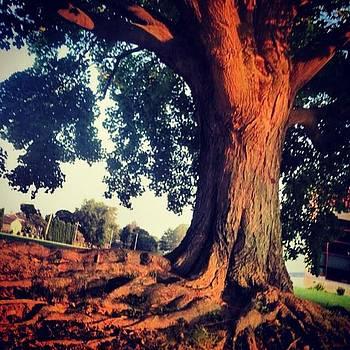 Tree Am by Bridgett Dockray