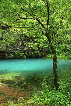 Tree and Blue Spring by Greg Matchick