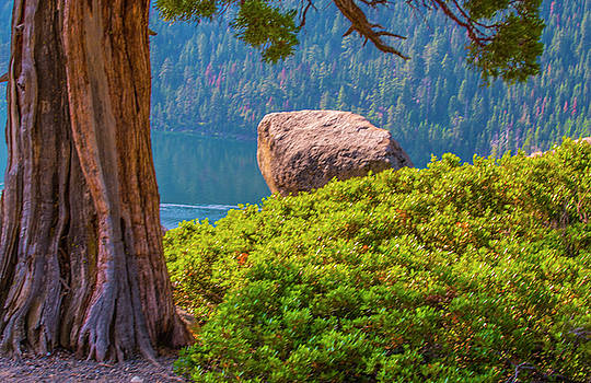 Tree And Boulder  by Steven Ainsworth