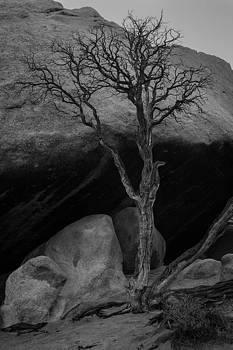 Rick Strobaugh - Tree and Boulders