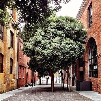 Tree and Brick by Julie Gebhardt