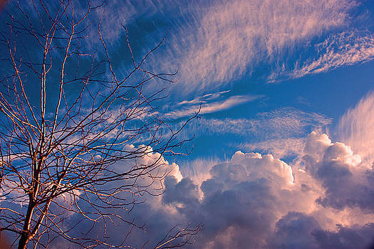 Tree and Clouds by John Scholey