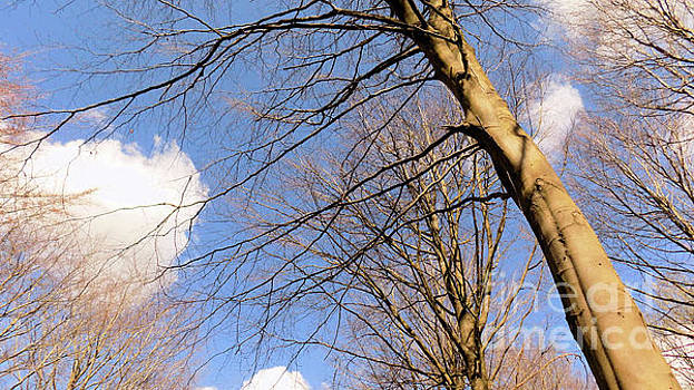 Tree and Fluffy Clouds by Mike O'Hagan