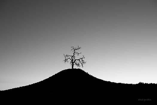 Tree and Hill BW by David Gordon