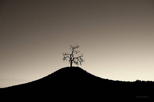 David Gordon - Tree and Hill  Montage Toned