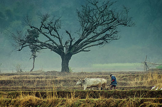 Tree and old farmer by Sagar Lahiri