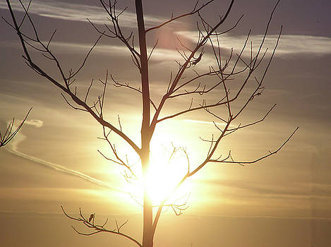 Tree and Sun by Richard Mitchell