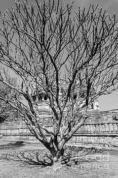 Tree and Temple by Hitendra SINKAR