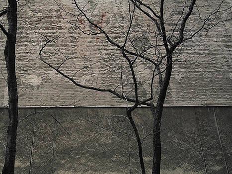 Tree and Wall NYC by Andrew Kazmierski