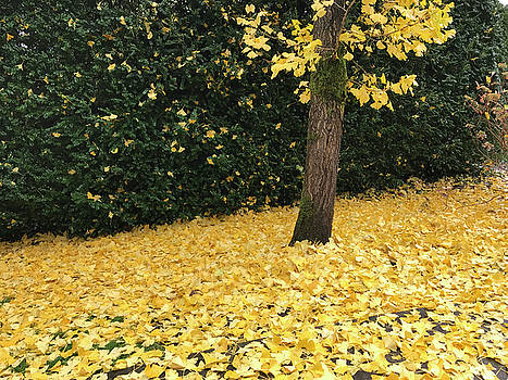 Tree and Yellow Leaves by John Clark