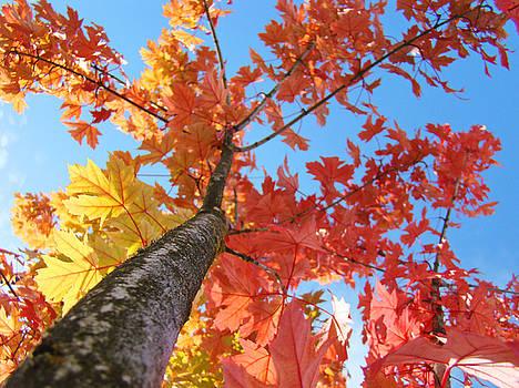 Baslee Troutman - Tree art prints Autumn Leaves Fall Art Blue Sky Baslee Troutman