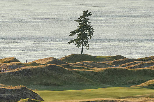 Tree at Chambers Bay by Jason Butts