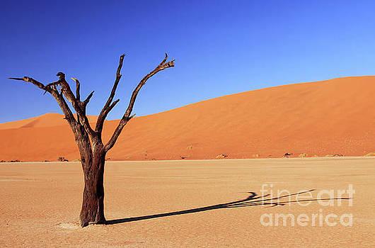 Tree at Dead Vlei, Namibia by Wibke W
