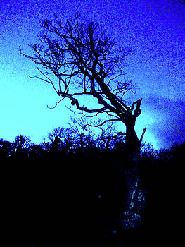 Tree At Night by Martin Williams