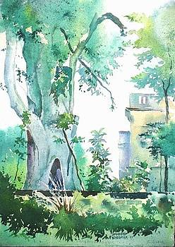 Tree at Pune University - 2 by Sandeep Khedkar