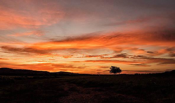 Tree at sunrise by Katherine Worley