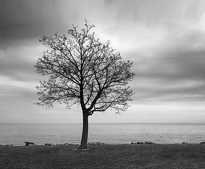 Tree at Sunrise by Kathy Weigman