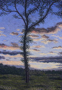 Tree at sunset, Marchiennes forest by Raphael Seygnovert