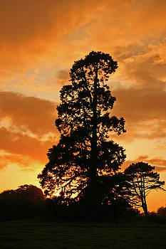 Martina Fagan - Tree at sunset