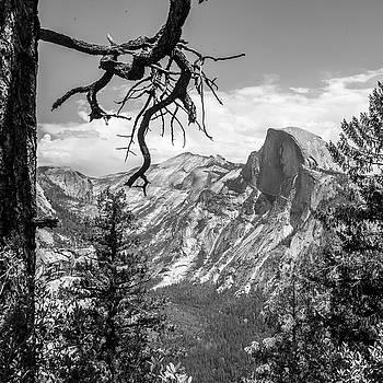 Tree at Yosemite valley by Ken Kartes