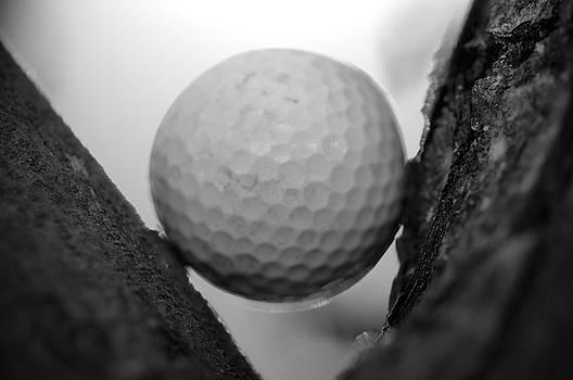 Tree Ball by Shawn Wood