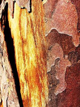 Tree Bark 1 by Brad Scoggins