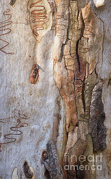 Tree Bark Collection # 55 by Philip Johnson