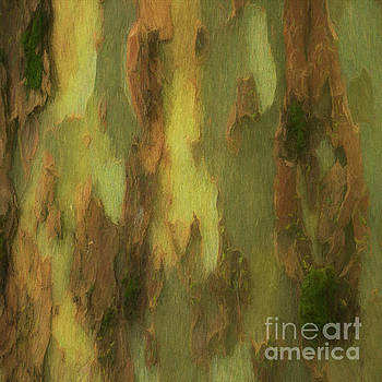 Tree Bark Collection # 66 by Philip Johnson