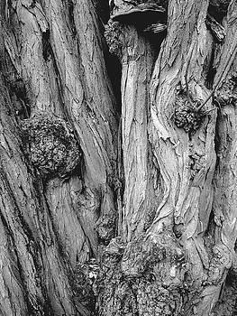 Tree Bark by Kenneth Carpenter