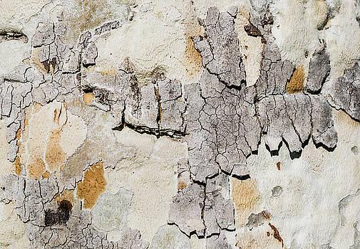 Robert VanDerWal - Tree Bark Pattern #11
