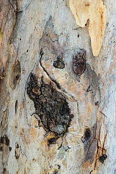 Robert VanDerWal - Tree Bark pattern #14