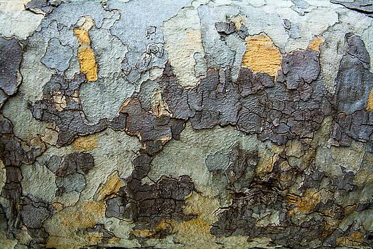 Robert VanDerWal - Tree Bark Pattern #5