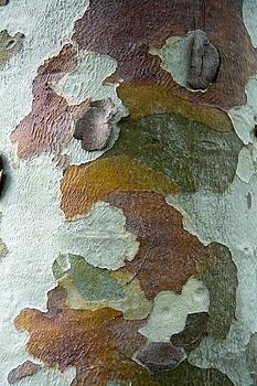 Robert VanDerWal - Tree Bark Pattern #6