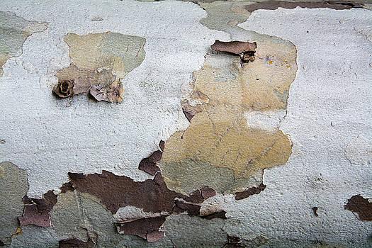 Robert VanDerWal - Tree Bark Pattern #7