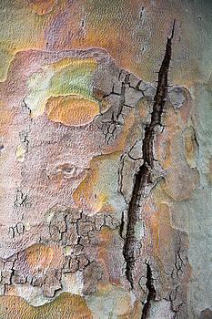 Robert VanDerWal - Tree Bark Pattern #9