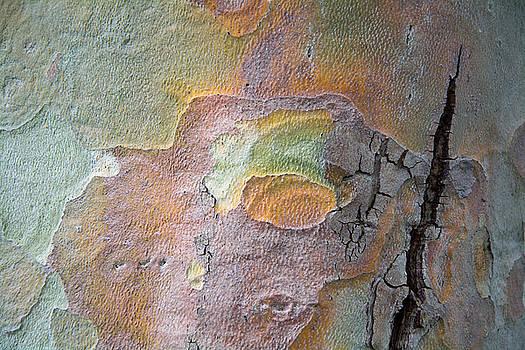 Robert VanDerWal - Tree Bark Patterns  # 4