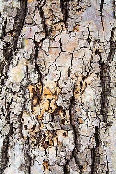 Robert VanDerWal - Tree Bark Pattern #1