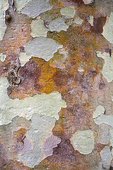 Robert VanDerWal - Tree Bark Pattern #2
